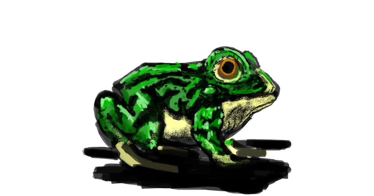 Drawing of Frog by Dettale