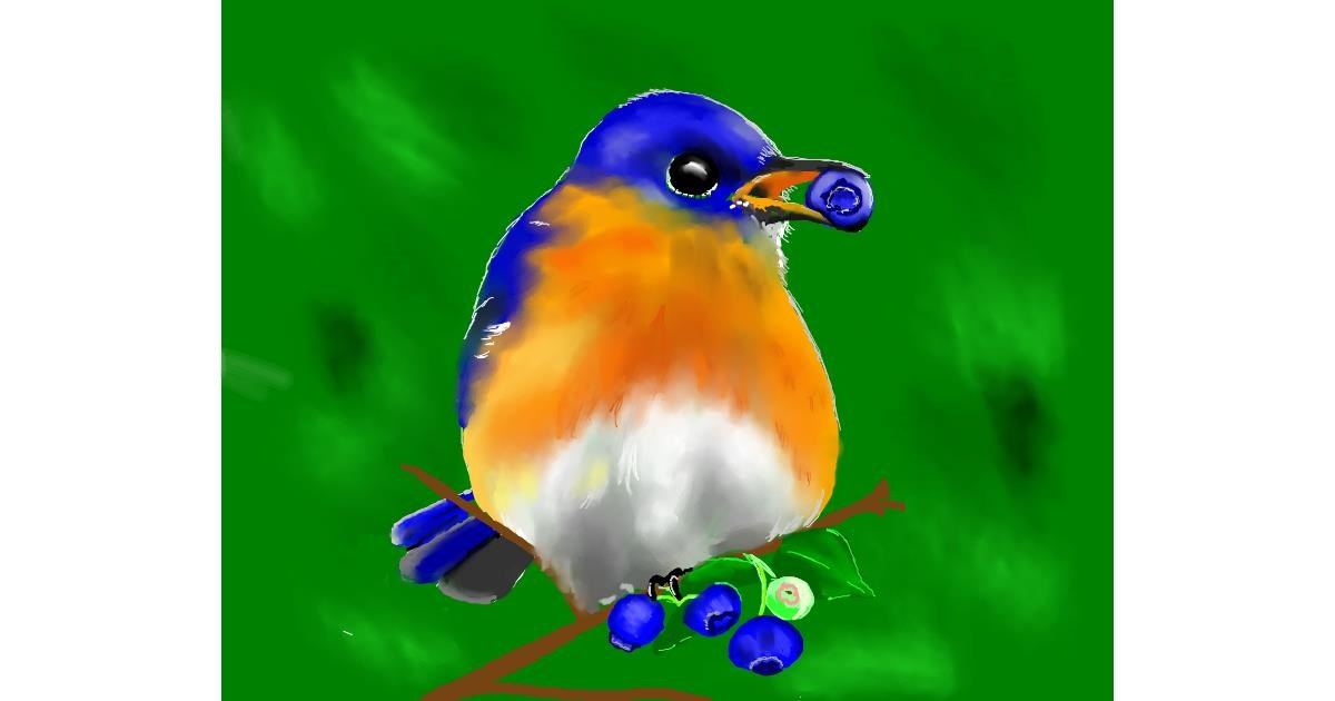 Blueberry drawing by Cec