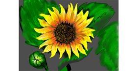 Sunflower drawing by SAM AKA MARGARET 🙄