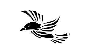 Bird drawing by anastasia