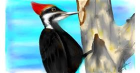 Woodpecker drawing by Sophie_draw24