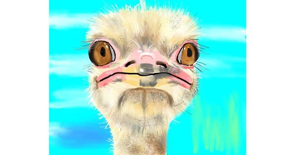 Ostrich drawing by Cec