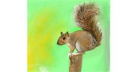 Squirrel drawing by Emit
