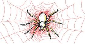 Spider drawing by kossara