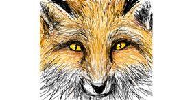Drawing of Fox by Primrose