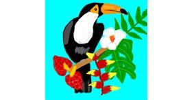 Drawing of Toucan by MaRi